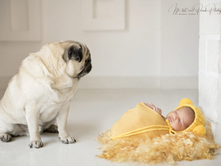 Baby and dog newborn photoshoot